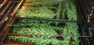How to Dry Rosemary in Oven