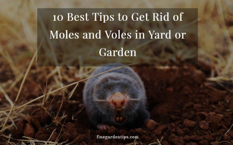 Get Rid of Moles and Voles