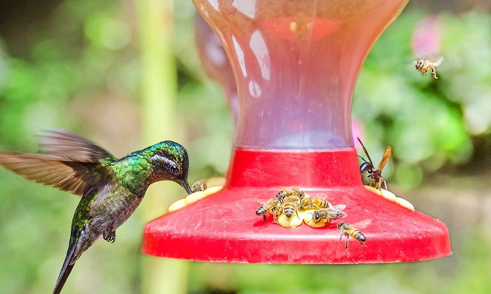 12 Tips on How to Keep Bees Away From Hummingbird Feeders